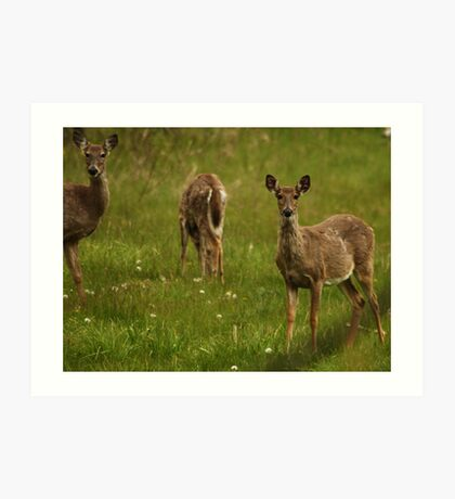 Three Deer Art Print