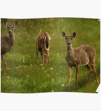 Three Deer Poster