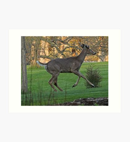 Running White-Tailed Buck Art Print