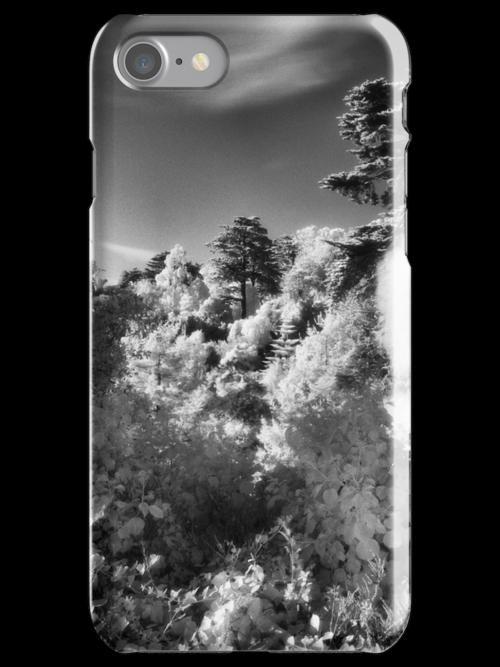 Strybing Arboretum, Golden Gate Park, San Francisco by Rodney Johnson