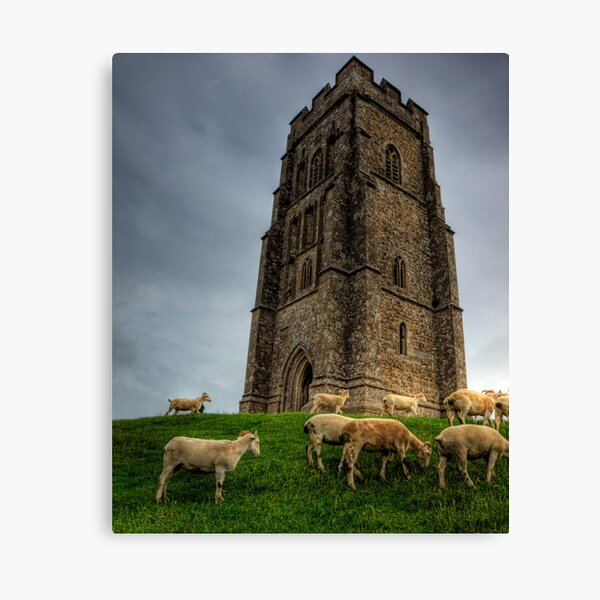 Sheep grazing on Glastonbury Tor Canvas Print