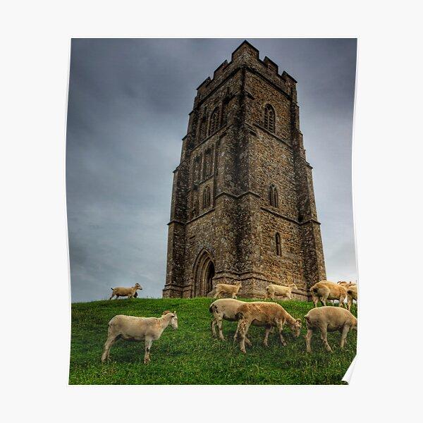 Sheep grazing on Glastonbury Tor Poster