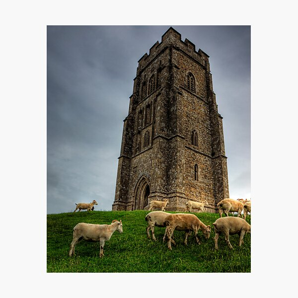 Sheep grazing on Glastonbury Tor Photographic Print