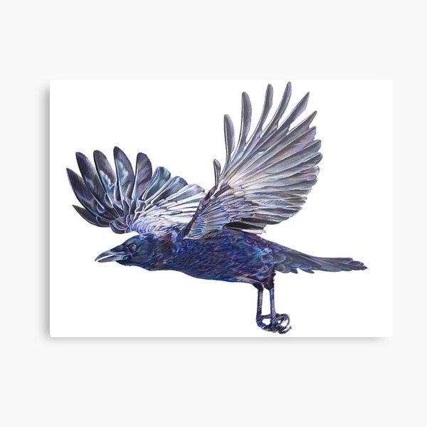 Crow in Flight - coloured pencil drawing Metal Print