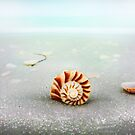 Soft Side of Hard Shell by Ticker