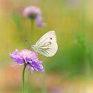 Butterfly by Aviana