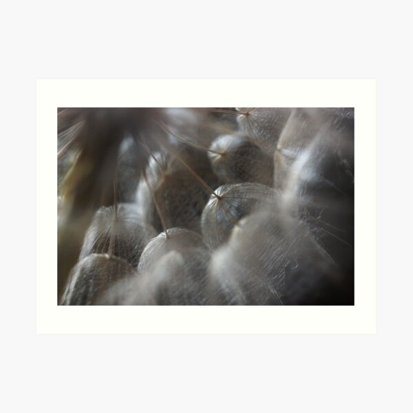 heart's perspective on fragile delimitations Art Print