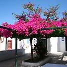 Flowering Courtyard on Santorini by Laurel Talabere