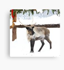 Reindeer for Christmas. Canvas Print