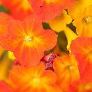 Orange Everywhere by Sheaney