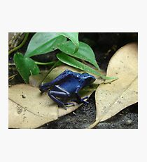 """""""Blue Dart Frog""""  by Carter L. Shepard Photographic Print"""