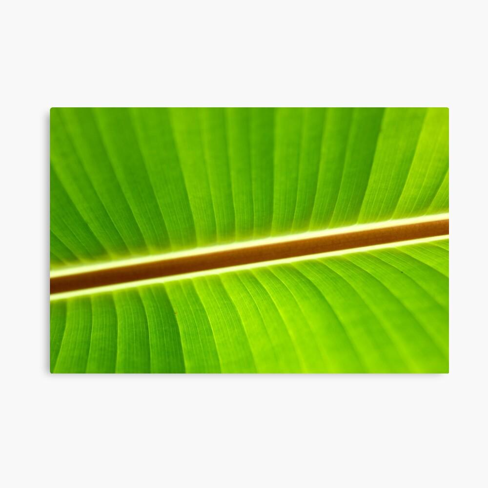 Banana Leaf 2 Leinwanddruck