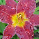 Morning Glory -Lily by vikpuma