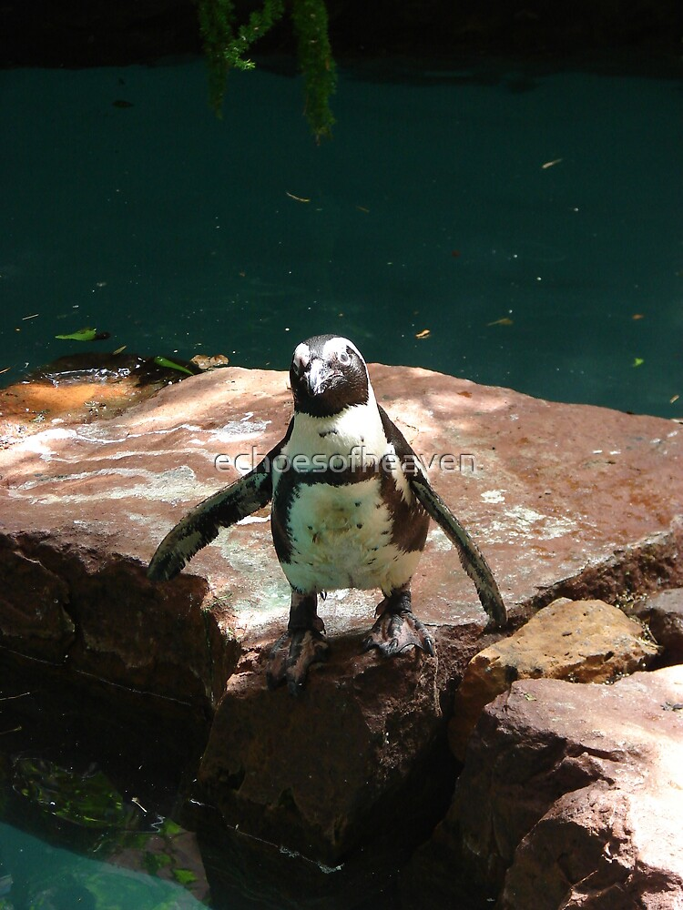 """Black Footed Penguin 2""  by Carter L. Shepard by echoesofheaven"