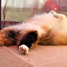Cat napping.. by Karen01