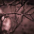 Winters Rosy Web. by Becca7