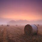 Purple Dawn by James Coard
