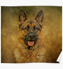 Chance - German Shepherd Poster