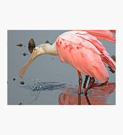 Spoonbill Splashing Around Photographic Print