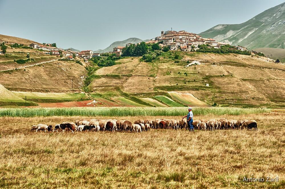 Castelluccio Sheepman by Antonio Zarli