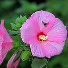 Flower and Bee by Jelderkc