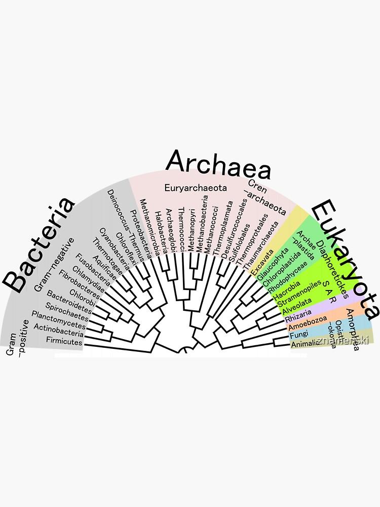 Phylogenetic Evolutionary Tree: Bacteria, Archaeva, Eukaryota by znamenski