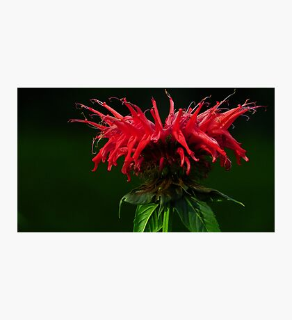 Colors of the Spirit Photographic Print