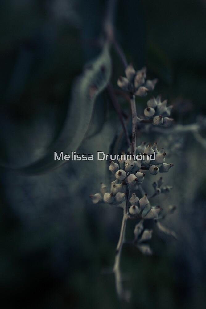Eucalyptus (colour) by Melissa Drummond