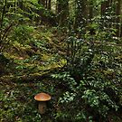 Rain Forest Stand out by olbetsy