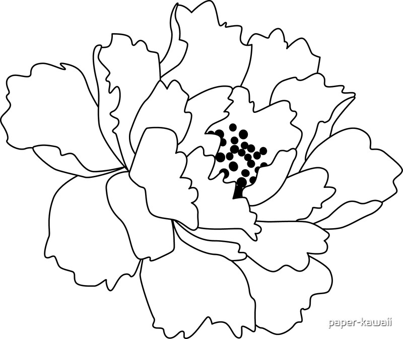 Chinese Flower Line Drawing : Quot white japanese peony flower art prints by paper kawaii