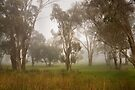 Country mist ...  by Rosalie Dale