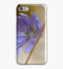Cichorium Intybus - Common Chicory | Center Moriches, New York iPhone Case/Skin