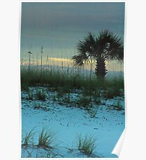 Palm at Dusk Poster