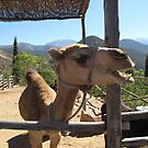 Peanut the camel by lilyisabelle