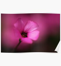 Pink Fluorescence Poster