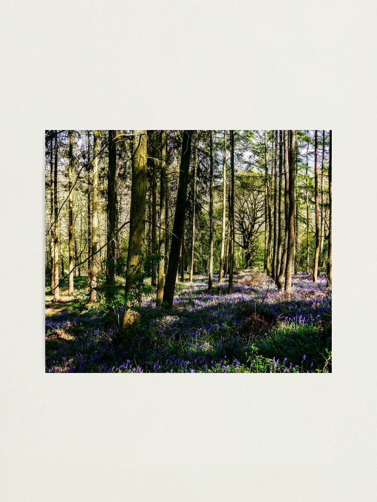 Alternate view of Natures Canvas Photographic Print