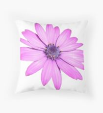 Single Pink African Daisy Against Green Foliage Isolated Throw Pillow