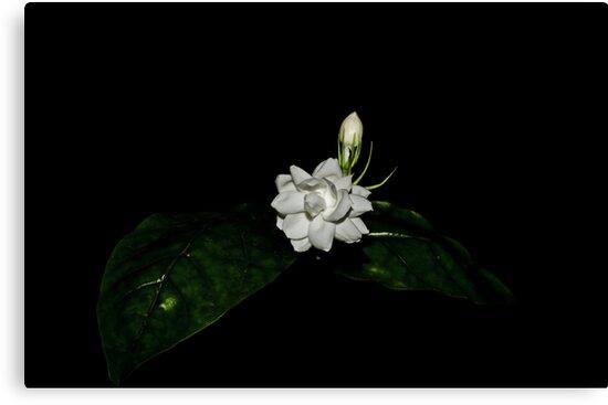 Jasmine by M-A-K