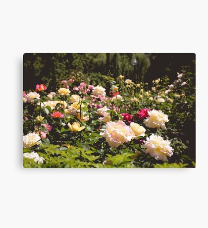 Rosey Patches Canvas Print