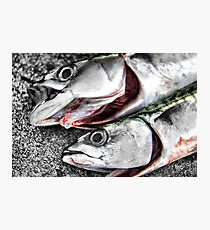Freshly Caught Mackerel  Photographic Print