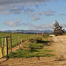 Sunshine gate by Karen01