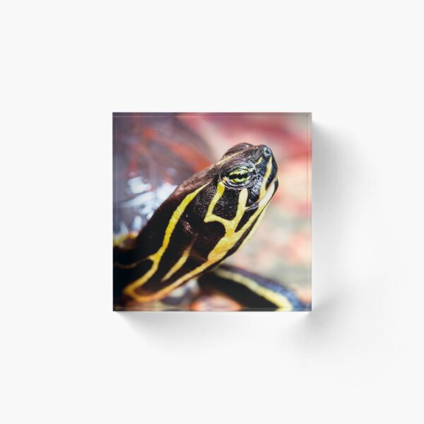 Yellow Bellied Slider Acrylic Block