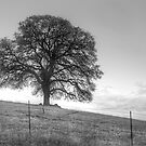 Oak Tree On A Hill by Diego Re