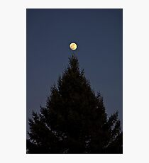 Tree Topper Photographic Print