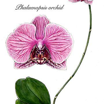 Phalaenopsis orchid by MaryKatC