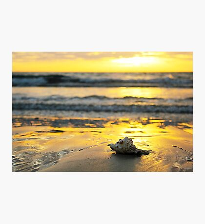 Sunset Shell Reflection Photographic Print