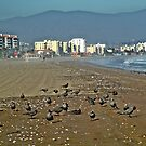 Playa. La Serena-Chile by cieloverde