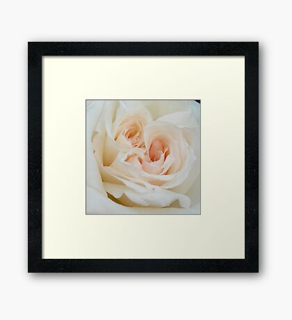Close Up View Of A Romantic White Wedding Rose Framed Print