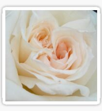 Close Up View Of A Romantic White Wedding Rose Sticker