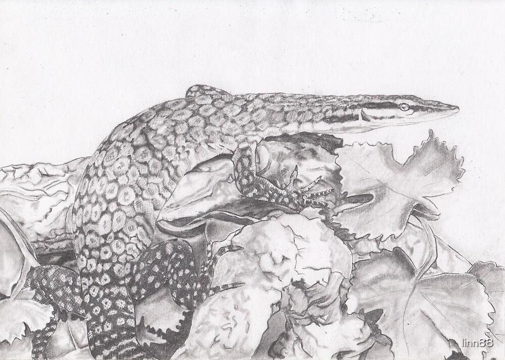 Kimberley Rock Monitor Lizard by linn88